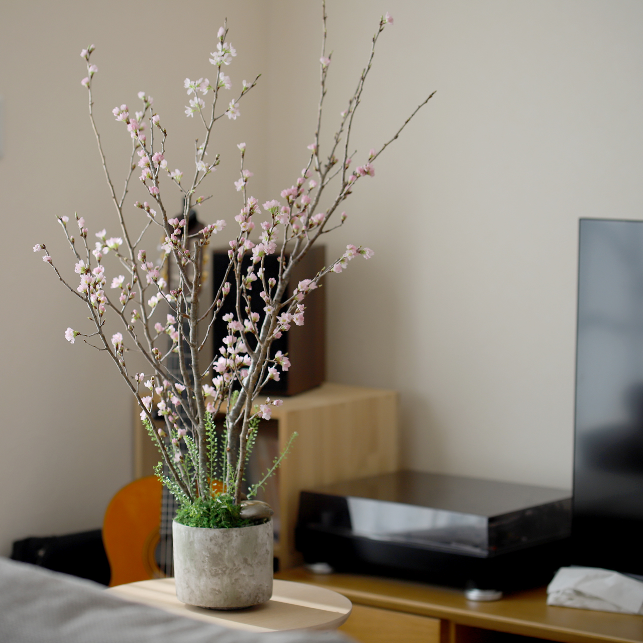 自宅で桜のお花見キット
